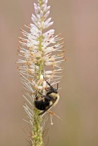 Bumble-Bee-13-8-_7428
